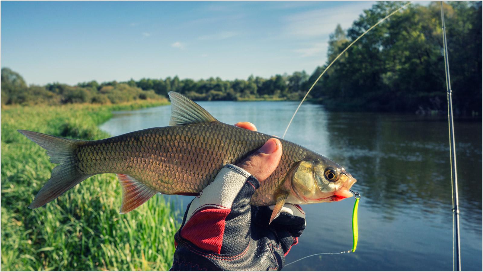 Картинки рыбалка лето