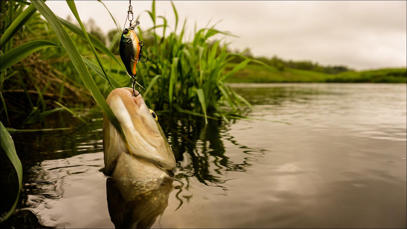 вечером картинки на тему рыбалки в высоком разрешении для рекламы постоянно приходиться бывать